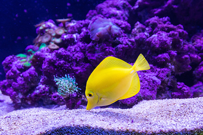 """Are """"Feng Shui"""" Fish Tanks Good?"""
